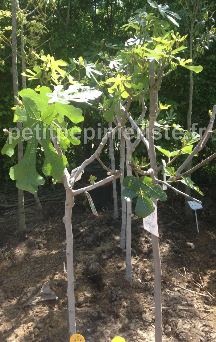 index of arbre fruitier. Black Bedroom Furniture Sets. Home Design Ideas