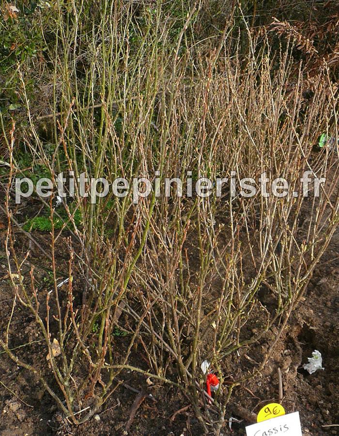 Arbuste Pour Sol Humide