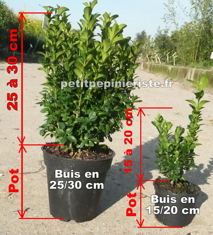 Buis prix de vente d 39 un buis for Ou acheter plantes pas cher