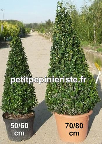 Buis prix de vente d 39 un buis for Vente arbuste