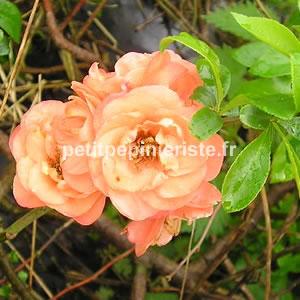 Japon est originaire du japon le poirier du japon fleurit de février